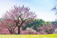 上海世纪公园踏青图片