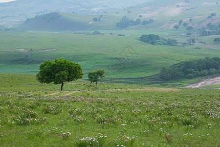 春季绿色的大草原图片