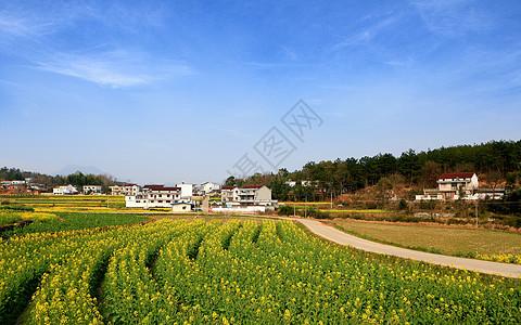 安徽潜山的油菜花图片