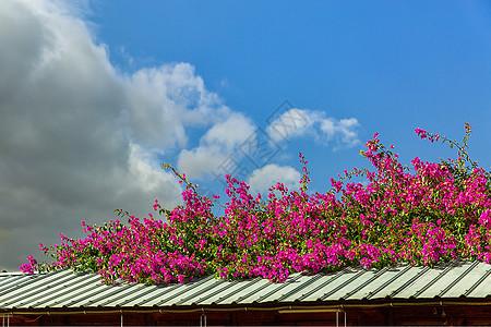 屋顶上的春天的花卉图片