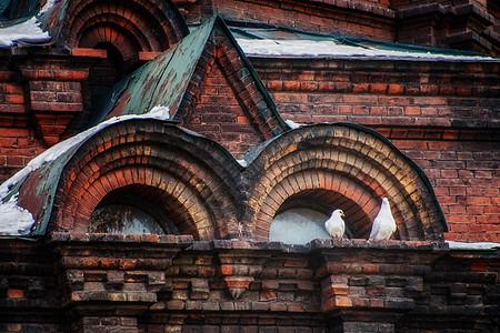 哈尔滨圣索菲亚大教堂上的白鸽图片