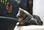 春困睡意满满的猫咪图片