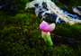 苔藓地里萌萌哒多肉图片