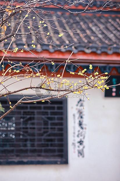 武汉晴川阁冬天梅花图片