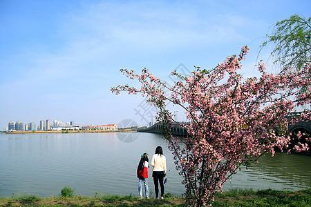 春和景明图片