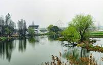 水乡春早图片