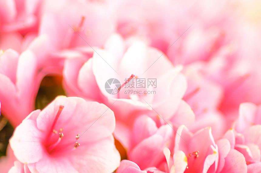 鲜花配景图片