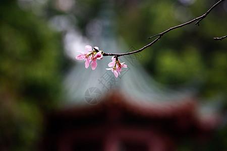 春天公园里美丽的花朵图片