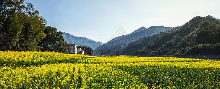 安徽歙县新安江春天的田园油菜花海风光图片
