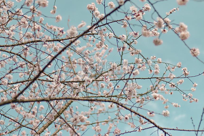 春色满园鲜花怒放图片