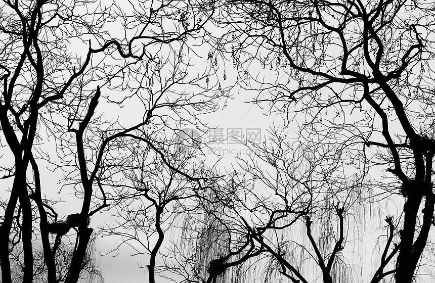 冬天树枝的剪影图片
