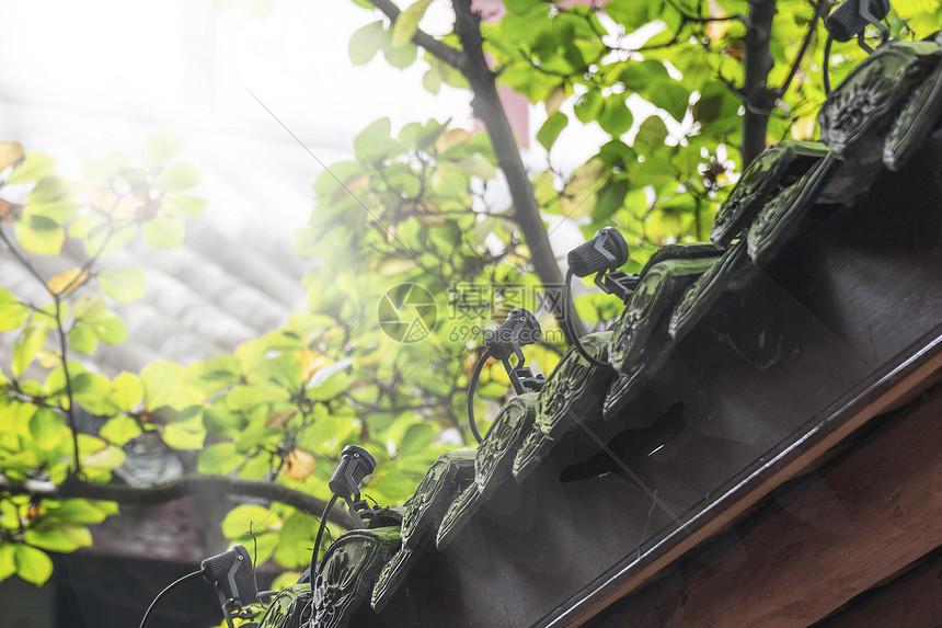 杜甫草堂拍到的阳光图片