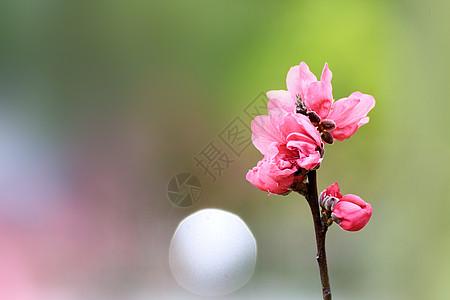 春天湿地公园中美丽的花朵图片
