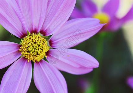 晴天下的花朵图片