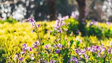 春天公园里的野花图片