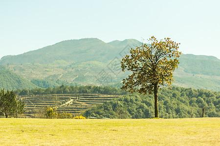 阳光下山顶的一颗小树图片