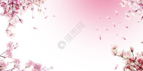 樱花背景图片