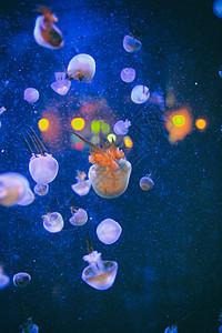 海洋馆水母图片