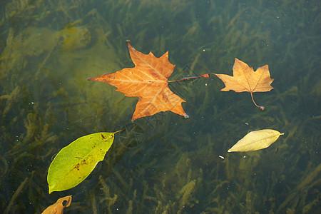 秋天杭州西湖美丽的落叶图片