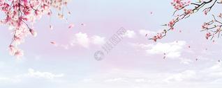 桃花花瓣梦幻蓝色banner背景图片