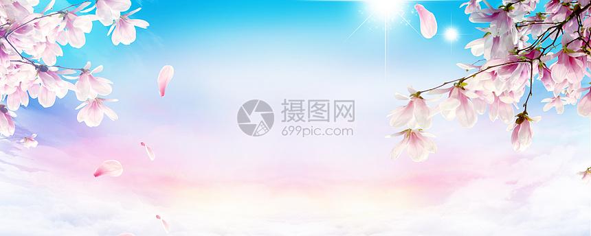 春季樱花清新背景图片
