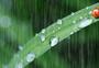 雨中的瓢虫图片