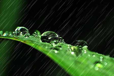 绿叶上的雨珠图片