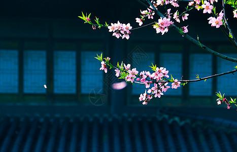 春日里桃花盛艳图片