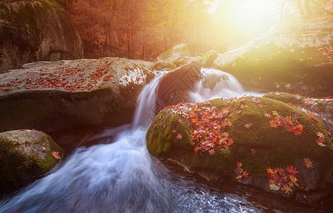 秋天枫叶溪流图片