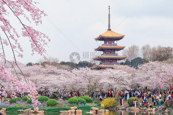 武汉东湖樱园图片