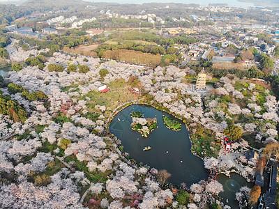 俯瞰武汉东湖樱园图片