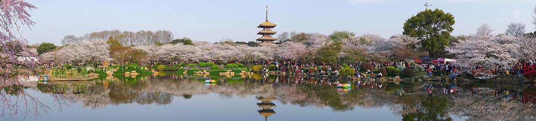 武汉东湖樱园长图图片