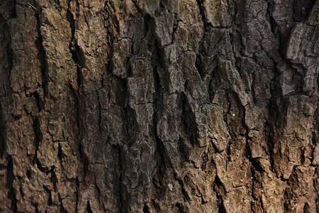 树皮上的纹理图片