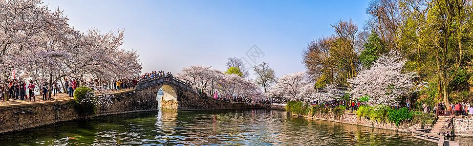 浪漫的长春桥樱花林图片