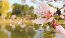 春天的气息图片