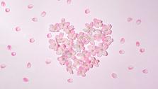 满满樱花开图片