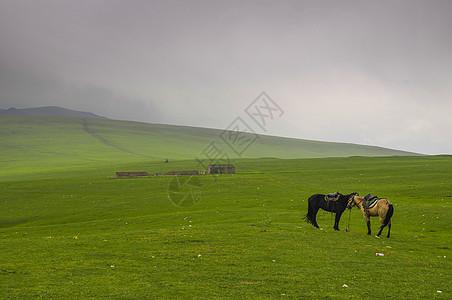 新疆巴音布鲁克草原骏马图片