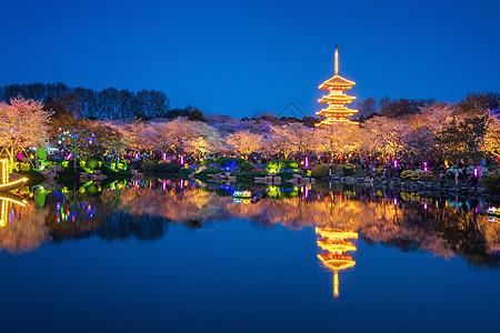 武汉东湖樱花园图片