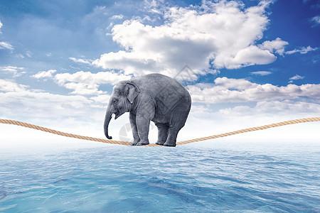 坐在绳索上的大象图片