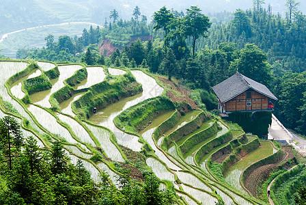 湖南紫鹊界梯田风景图片