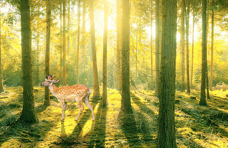 树林中漫步的麋鹿图片