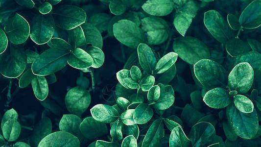 绿色植物背景图片
