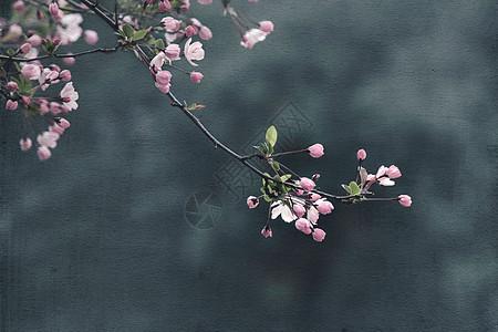 春天画意海棠图片