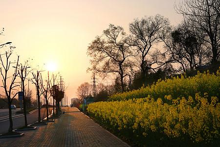 春光明媚图片