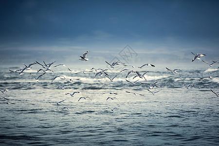 新西兰海鸥飞过海面图片