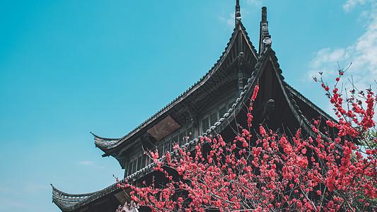 桃花与寺庙图片