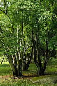 古老大树图片