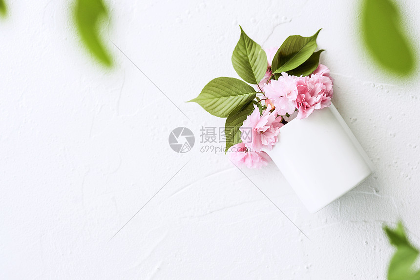 春日樱花绿叶白底仰望图片