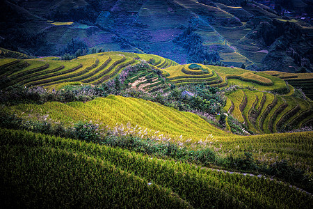 桂林龙脊梯田图片