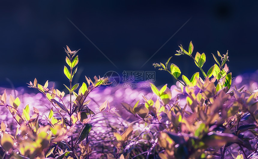 浪漫梦境般的春色图片